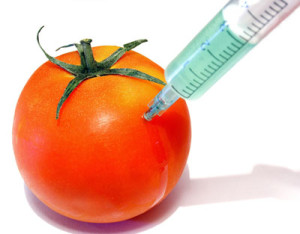Genetically Modified Foods – Not for Human Consumption!