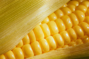 Beware of these 12 GMO Foods!