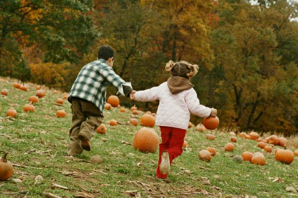 Putting Some Pumpkin into Your Life